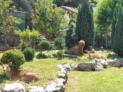 In primo piano airola il giardino segreto tra i parchi pi belli d 39 italia - Il giardino segreto banana ...