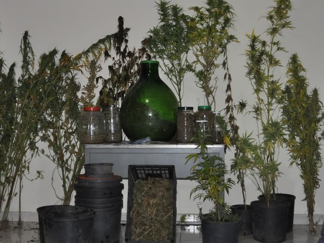 http://www.realtasannita.it/bt_files/newspaperFiles/piantemarijuana_2.jpg
