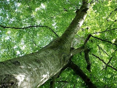 Provincia: avviati i cantieri della riforestazione. 29 operai al lavoro